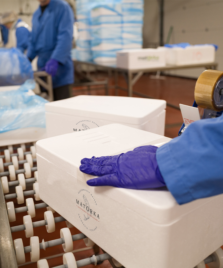 Matorka employee packaging salmon in styrofoam containers